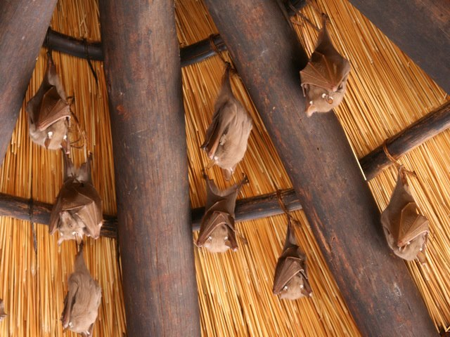 freetailed bats leaving roost